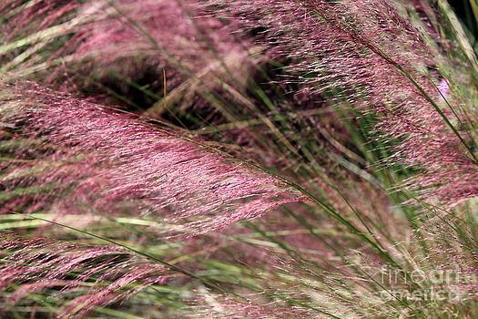 Pink Grass by Theresa Willingham