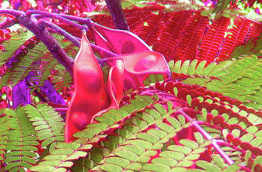 Pink Mimosa by Juliana  Blessington