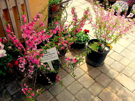 Pink Plants by Amy Bradley
