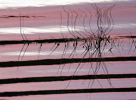 James Steele - Pink Refections