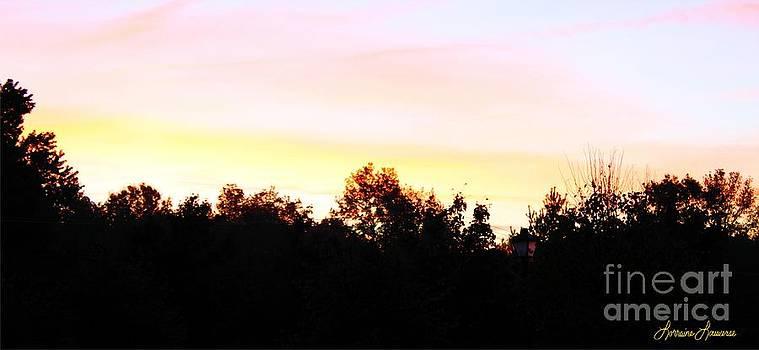 Pink Skies by Lorraine Louwerse