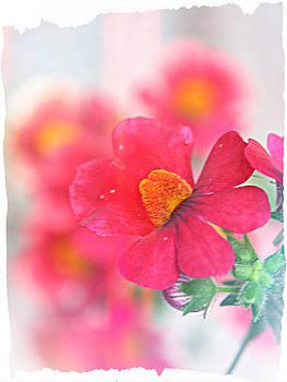 Pink by Susie DeZarn