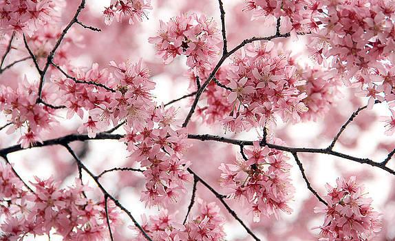 Pink tree by Yosi Cupano