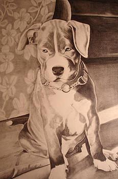 Pitty Pet Portrait by Yvonne Scott