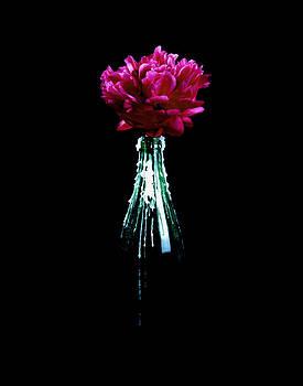 Pleasured Soul by Marcio Faustino