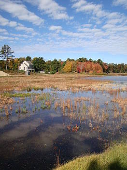 Plymouth Cranberry bog by Mark Haley
