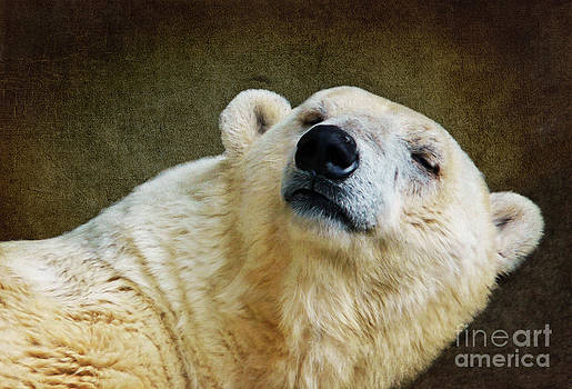 Angela Doelling AD DESIGN Photo and PhotoArt - Polar Bear