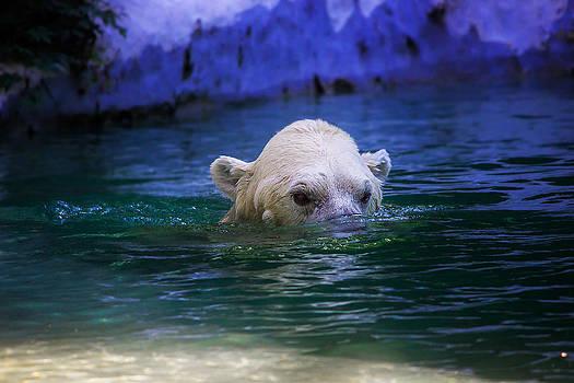 Polar Bear by Robert Mirabelle