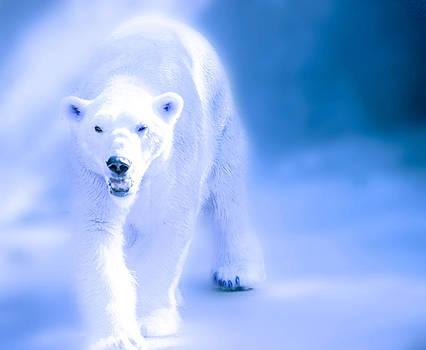 Polar Bear Walk by Robert Mirabelle