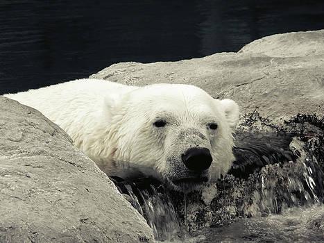 Polar Relaxation by Charles Benavidez