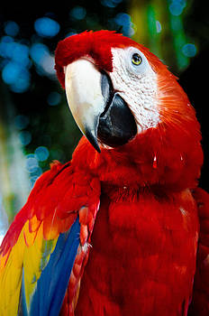 Polly Want a Cracker by William Shevchuk