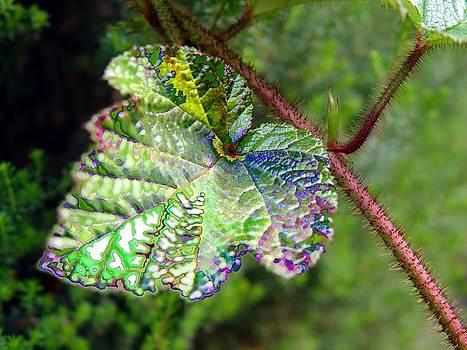 Polychromatic Cholorophyll by Shiladitya Sinha