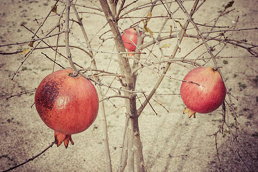 Pomegranate by Rufat Abas
