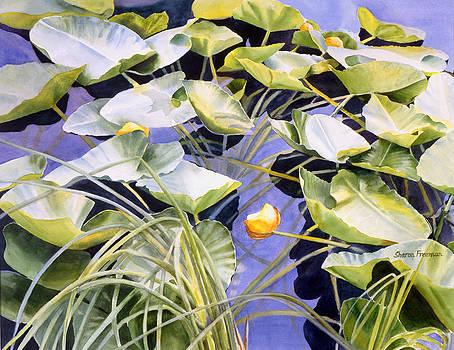 Sharon Freeman - Pond Lilies