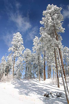Ponderosa Morning by Laurie Penrod