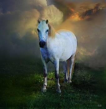 Pony by George Lai