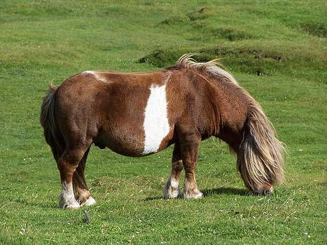 Pony by George Leask