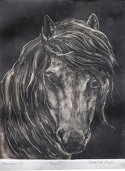 Pony I by Barbel Amos