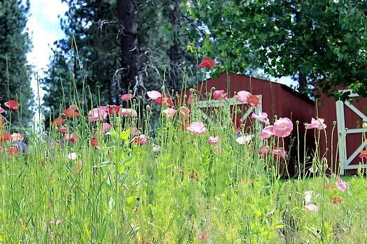 Poppy Field by Myrna Migala