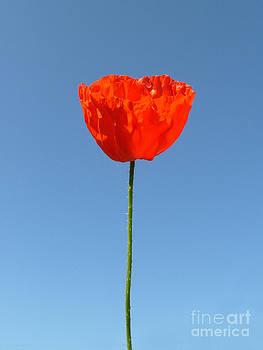 Poppy in the Sky by Karin Ubeleis-Jones