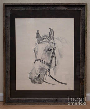 Portrait of a Horse by Becka Noel