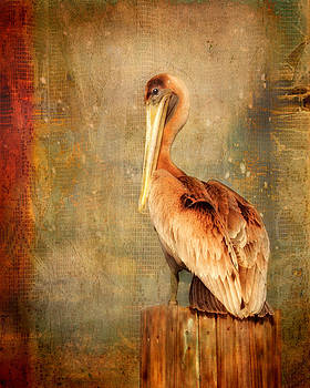 Portrait of a Pelican by Karen Lynch