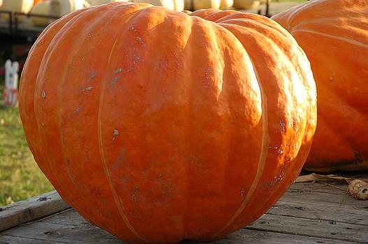 LeeAnn McLaneGoetz McLaneGoetzStudioLLCcom - Pounds of Pumpkin  Fun