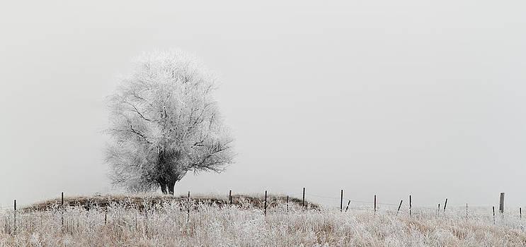 Prairie Frost by Patrick Ziegler