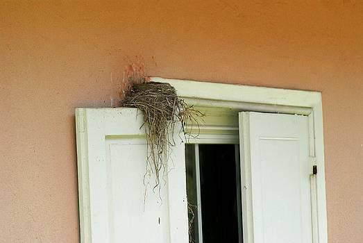Precious Nest by L Granville Laird
