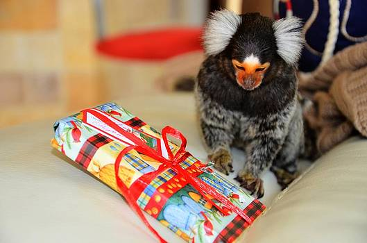 Present Time Chewy The Marmoset by Barry R Jones Jr