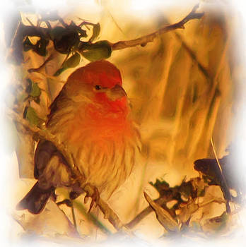 FeVa  Fotos - Pretty Bird on a Cold Morning