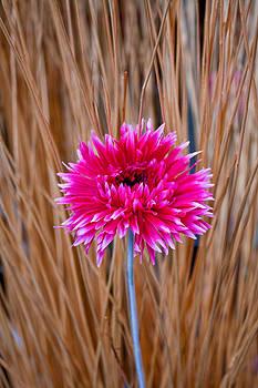Pretty in Pink by Aidan Minter