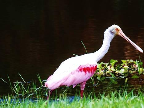 Pretty in Pink II by E Luiza Picciano