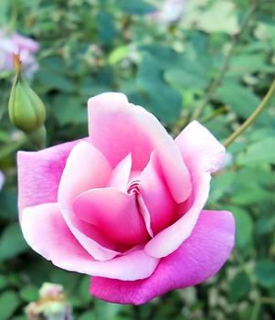 Lynnette Johns - Pretty In Pink