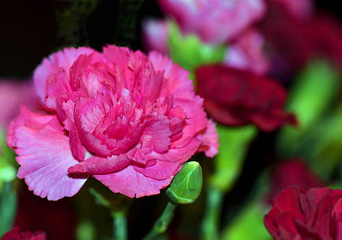 Pretty In Pink by Sandi OReilly