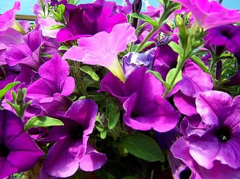 Pretty much Purple by Susan Saver