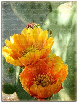 Prickly Pear Blooms by Terry Temple