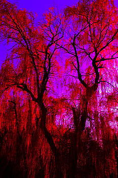 Psychadelic Love Willow by Micheal Landers