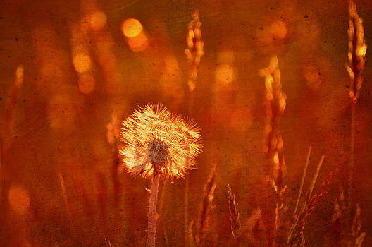 Emily Stauring - Puff of Sunset