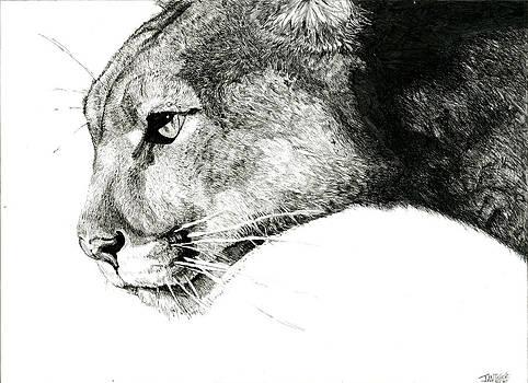Puma  by Ian Tullock