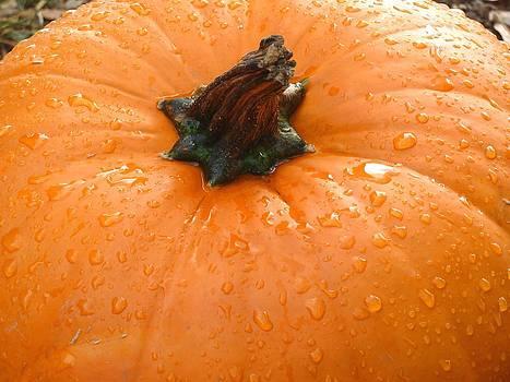 Pumpkin Dew by Jennifer Jeffris