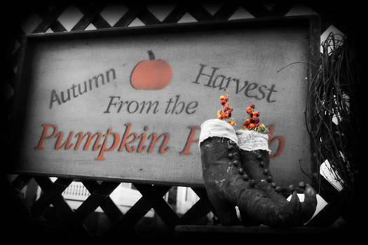 Pumpkin Harvest by Laura Tucker