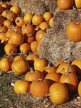 Pumpkin Harvest by Patricia McKay