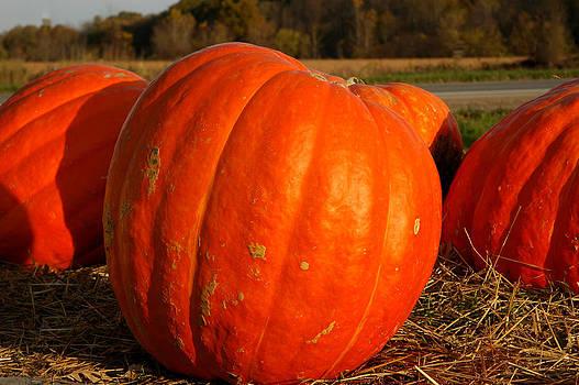 LeeAnn McLaneGoetz McLaneGoetzStudioLLCcom - Pumpkin Hay ride