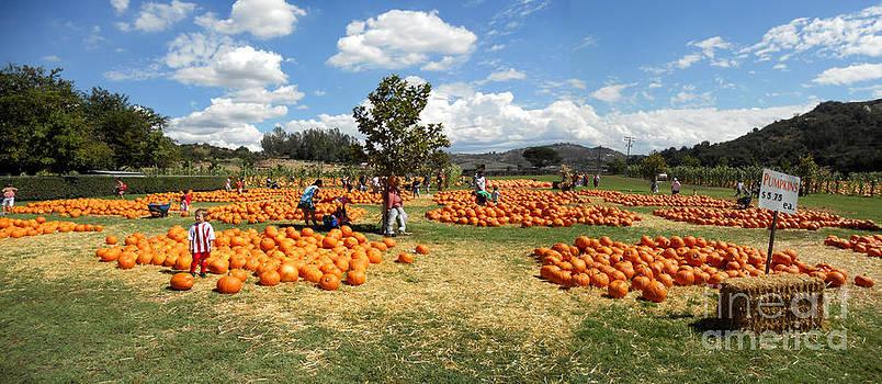 Pumpkin Horizon by John Keasler