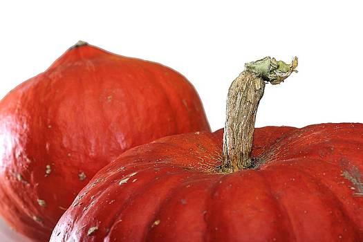 Pumpkin by Kent Andersen