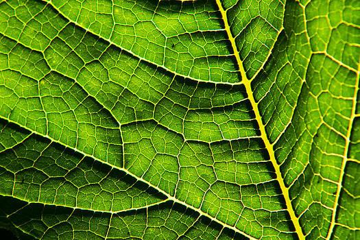 Matt Dobson - Pumpkin Leaf Abstract 1