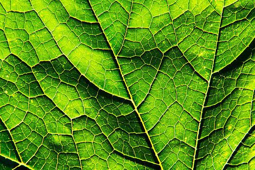 Matt Dobson - Pumpkin Leaf Abstract 4