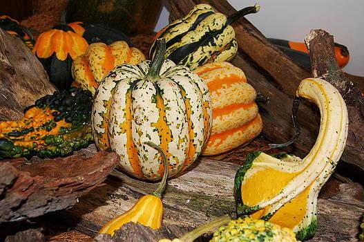 Pumpkin by Lenka Kendralova