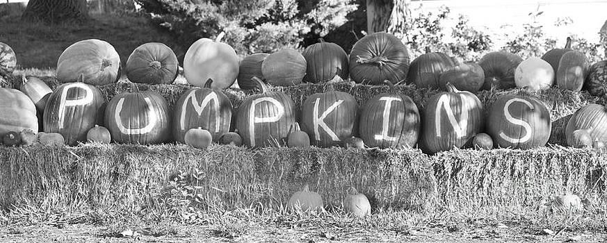 James BO  Insogna - Pumpkins P U M P K I N S BW
